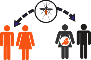 How know youve been infected zika virus health